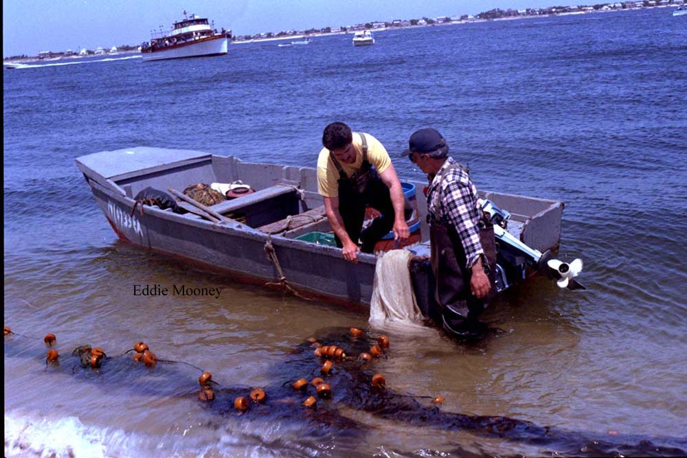 This was taken by Eddie Mooney in the early 1980s. They were catching live bait to go out fishing. Fishing in the Great South Bay is so much fun.